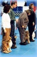 Spokane Dog Training Club